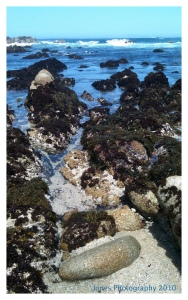 Tidepools along the 17 Mile Drive, Monterey, CA
