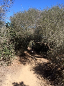 So. Cal. is awash in chaparral of sages and indigenous oaks. The vegetation smells wonderful as you hike through it.