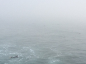 There are still at least 25 surfers and one BIG sea lion in this pic taken at 4:45