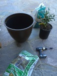 pot, soil, drill and tree- check