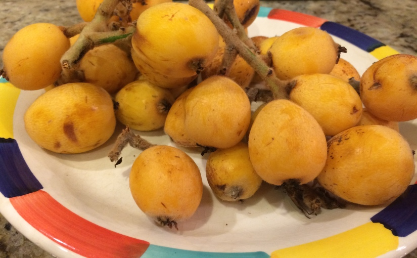 Loquats from Richard (if that is his real name)