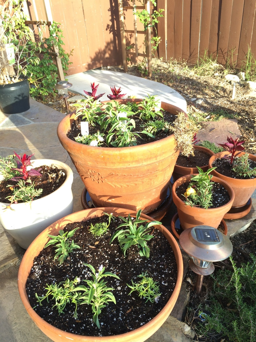 """Part Two- My Yard """"Cleans Up Good"""" more of APRIL Project of theMonth"""