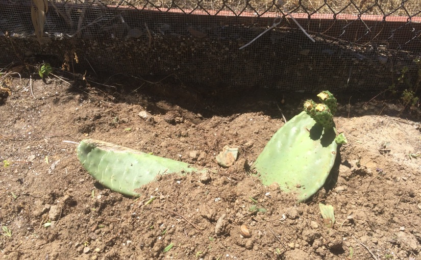 APRIL- Project of the Month, Yard Clean-Up Prickly Part3