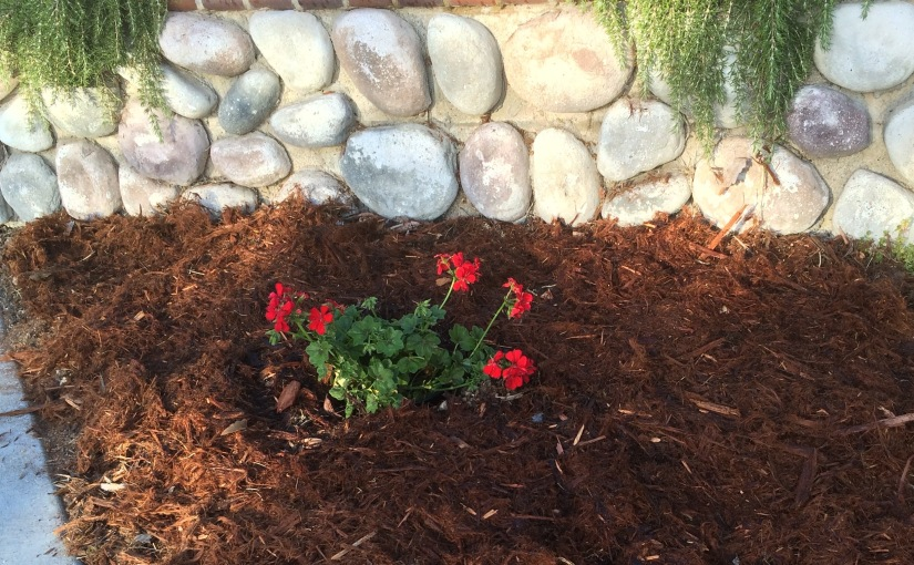 APRIL Project Part Five- Sidewalk Prettifying and Yard Beautification… because the neighbors deserveit.