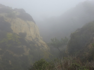 This is the closest photo I could come up with- Torrey Pines in the fog... (photo credit to andrewharper.com)