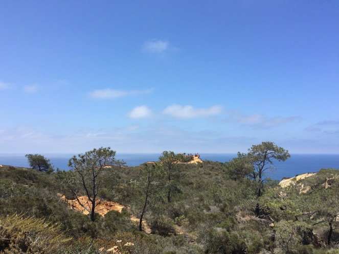 Stunning blue sky, green pines, and red cliffs, two days ago...