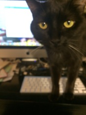 Might I resume typing, cat?